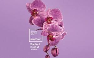 01_radiant_orchid