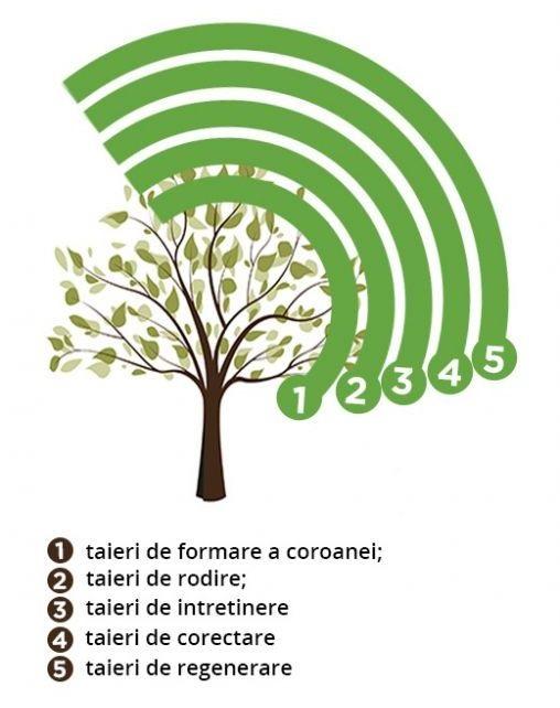 tipuri_de_taieri