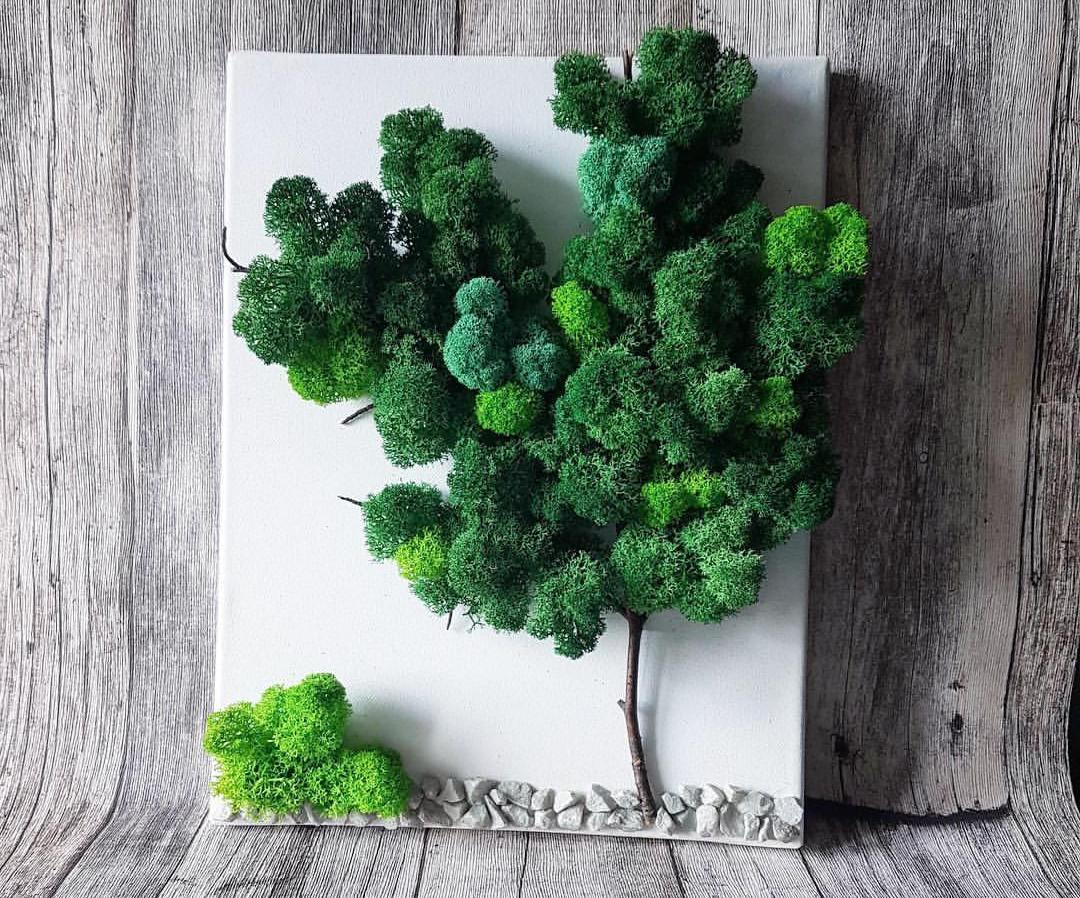 Pereți verzi din licheni și mușchi decorativi. Aranjamente ușor de îngrijit pe care le poți face și tu