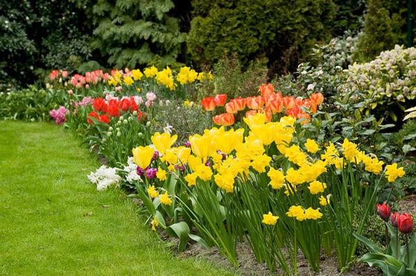 flori de pirmavara