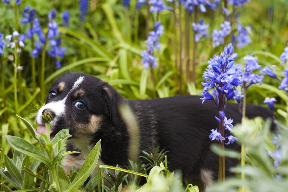 Cum să ţii câinele departe de florile din grădină