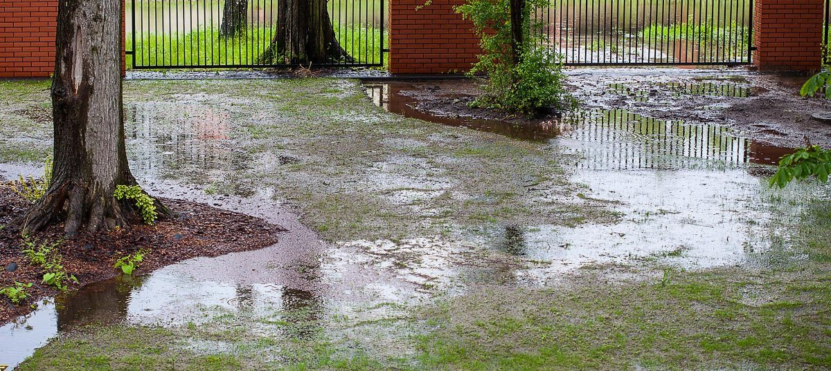 gazon in perioadele ploioase
